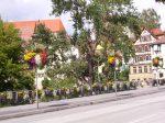 Tübingen,Blumen